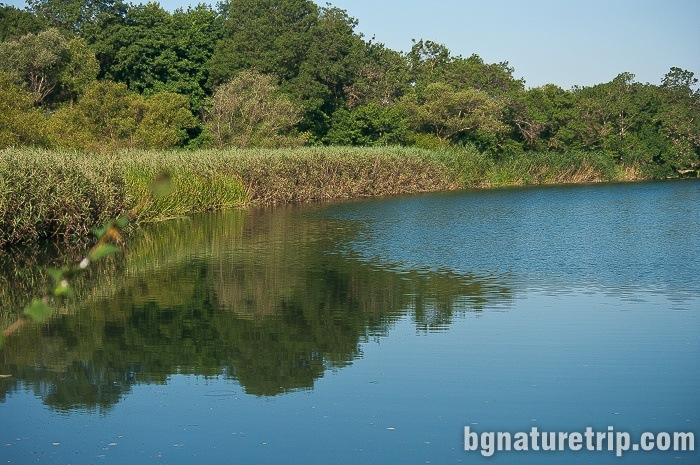 The vegetation-rich shores of the Veleka river