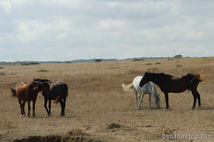 Grazing horses in the grasslands past the path