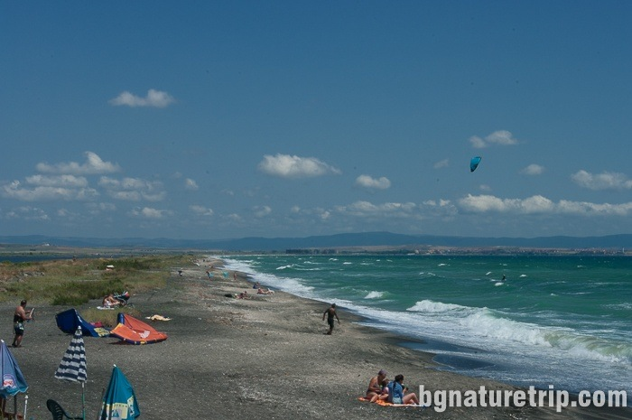 In the summer, at the wild beach around Pomorie, there are also summer-residents.