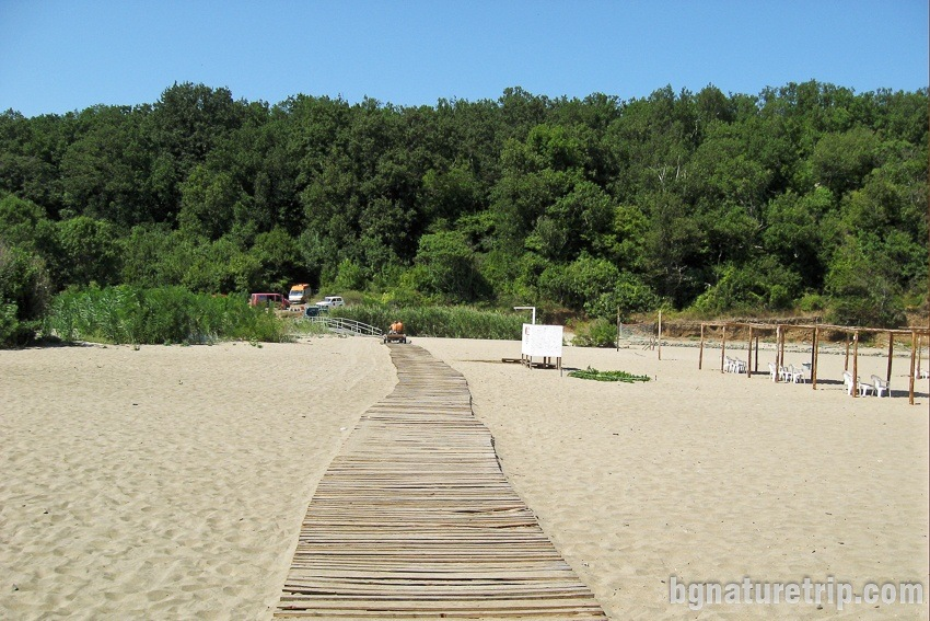 Silistar Beach - the wild forest behind the sand strip