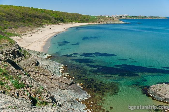 The wild beach Lipite in the spring